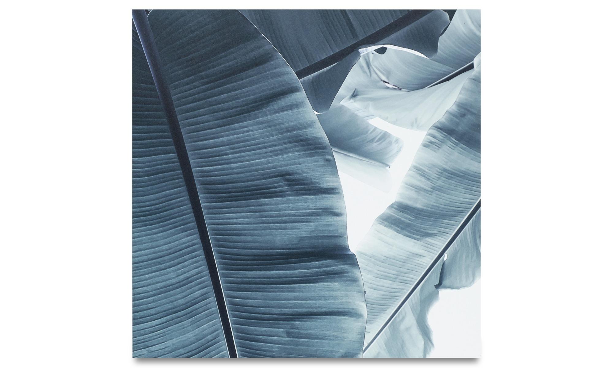 Gallery - Botanic metal print, Banana - Metal