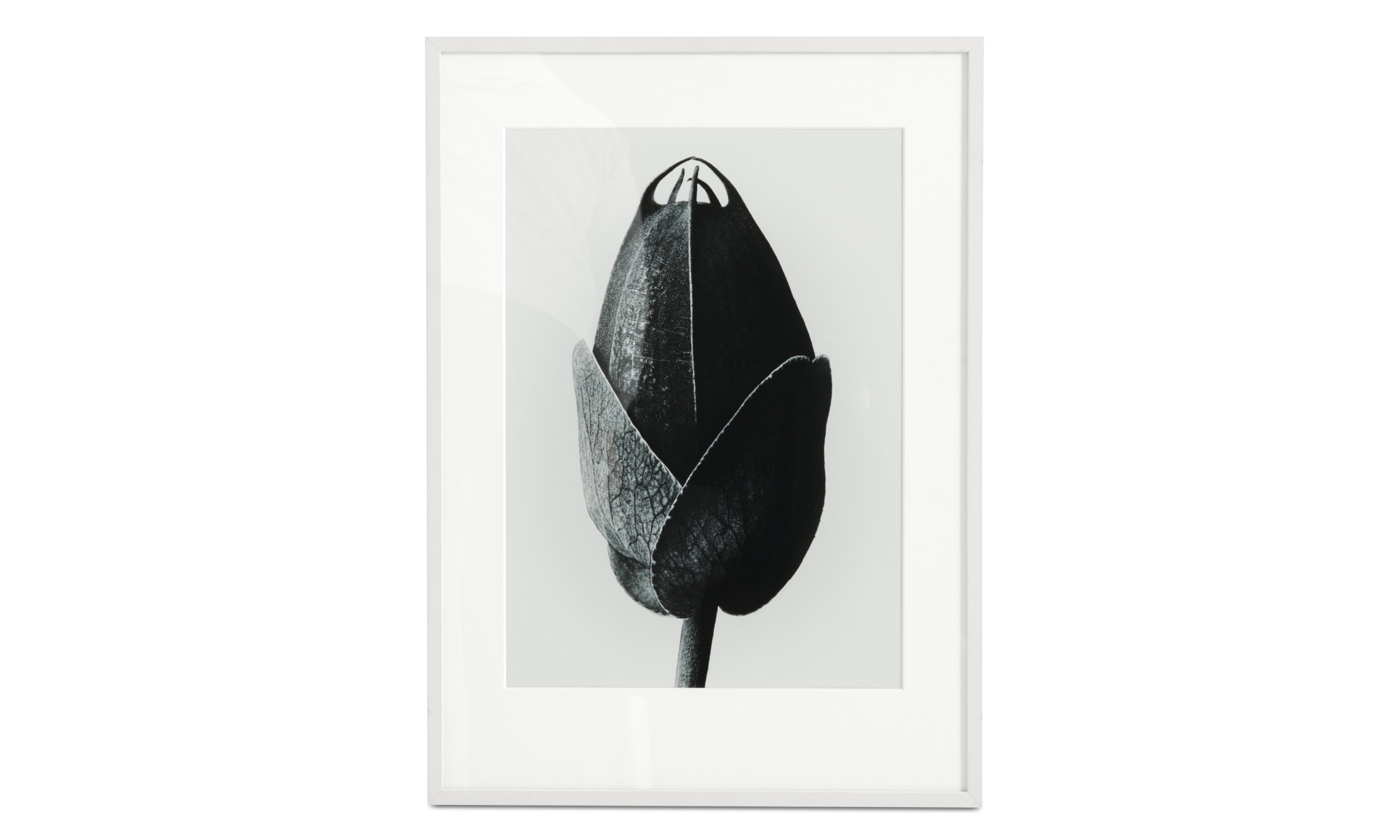 Gallery - Passion Flower framed art - Black - Wood