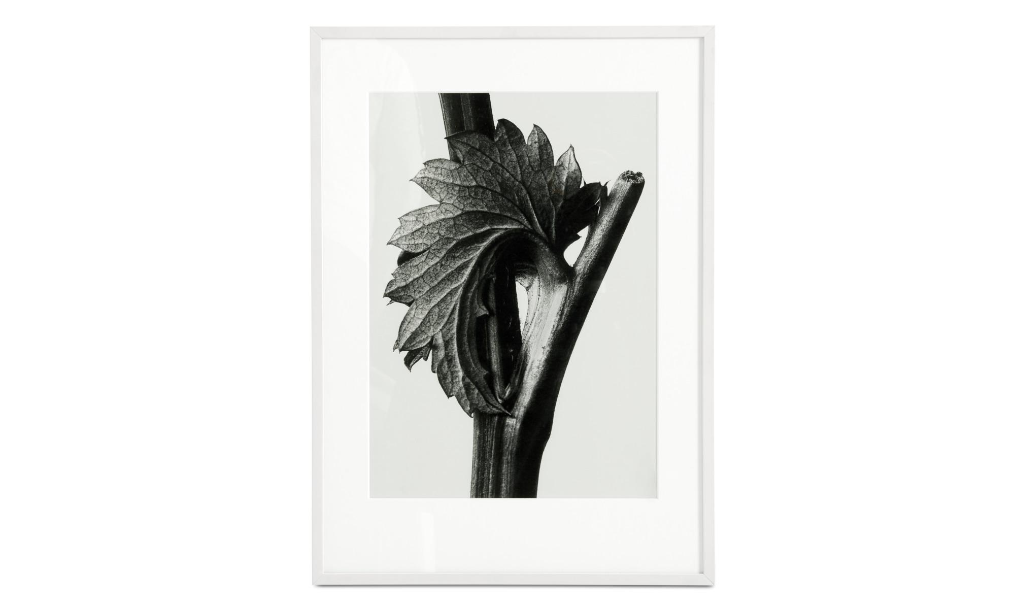 Gallery - Canadian Burnet framed art - Black - Wood