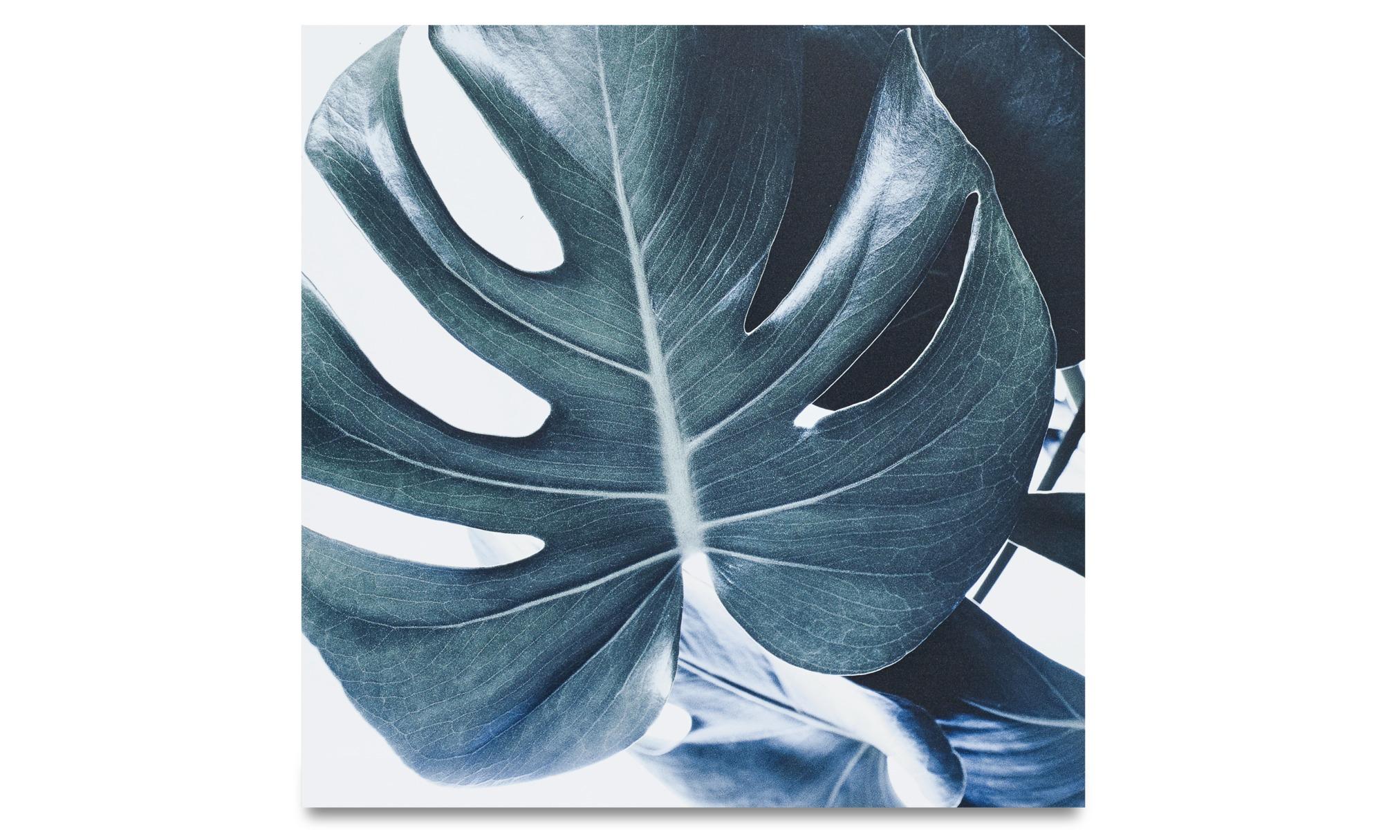 Gallery - Botanic metal print, Monstrea - Metal
