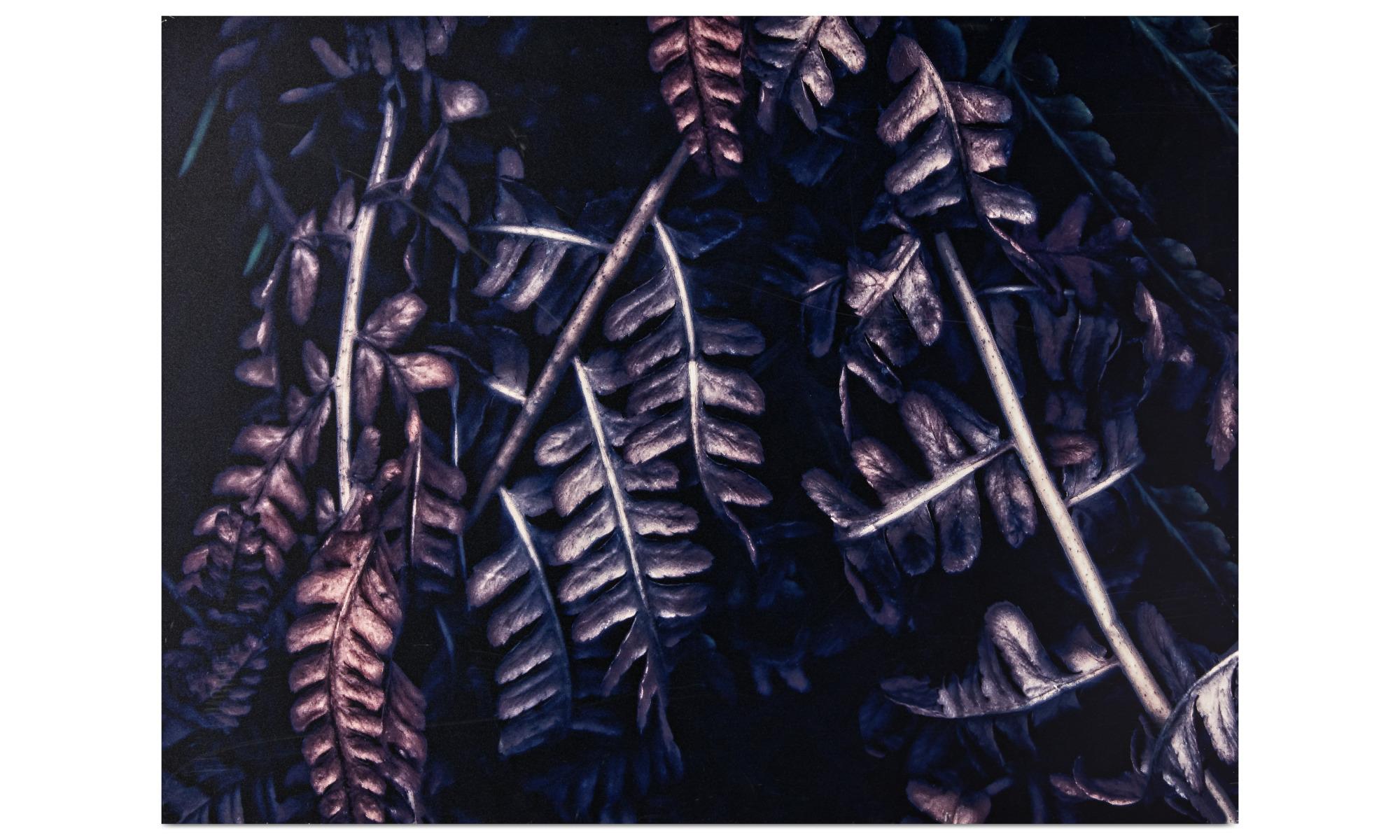 Gallery - Forest Dark dibond print - Purple - Aluminium