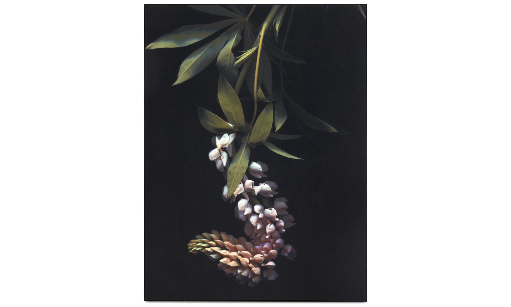 Gallery - Herbarium I gallery - Black - Metal