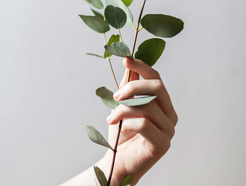 Hand holding leaves