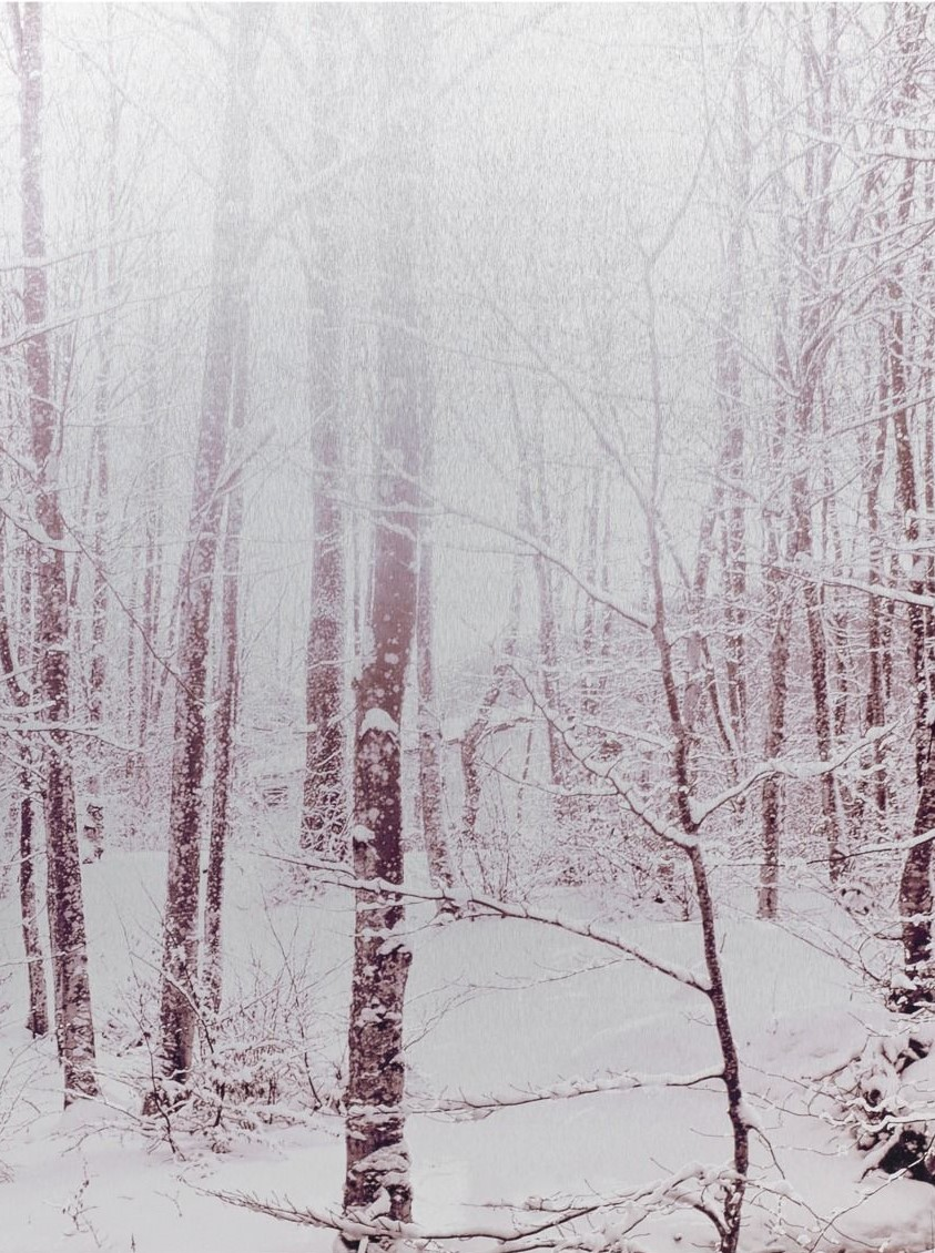 White Forest Metalldruck