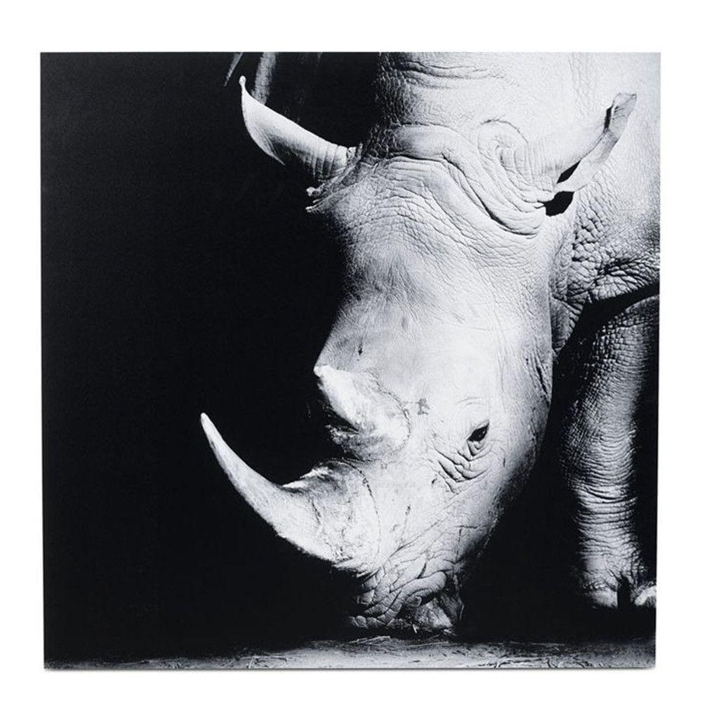 Photographie Rhinocéros -25%