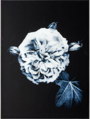 Nightrose Gallery
